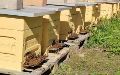 Maalämpöä hunajatilalla